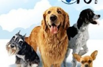 Dogs 101 – Animal Planet